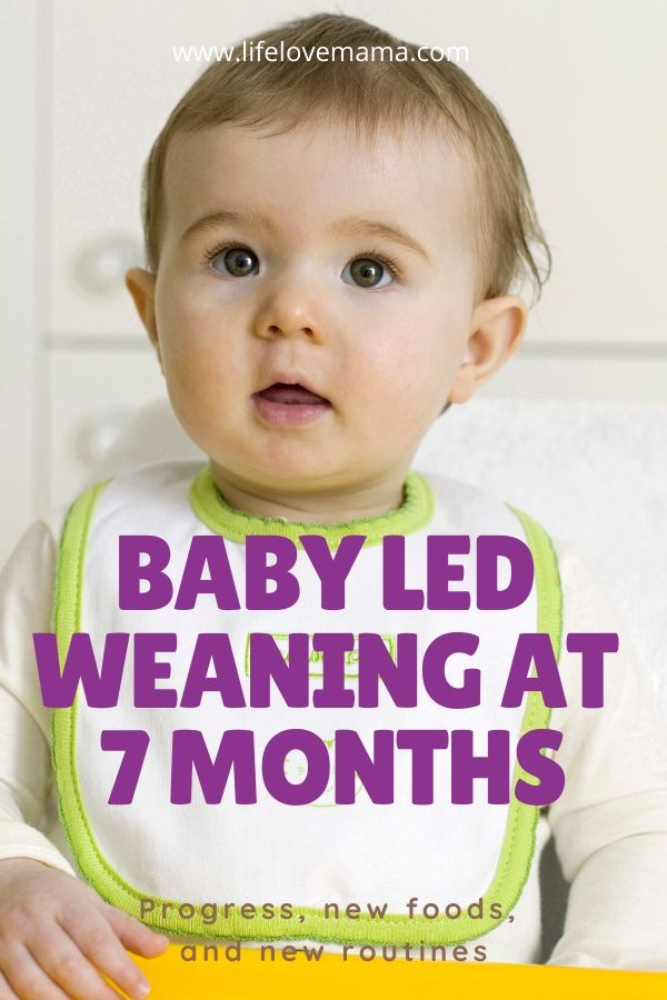 baby led weaning at 7 months/feeding baby solids at 7 months